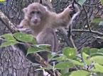 湖南宁远:九嶷山中猕猴乐