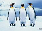 奇趣大自然20110921期:北极生命之网