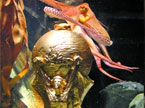 """世界杯午间大满贯20100713期:章鱼保罗""""加冕""""大力神杯"""
